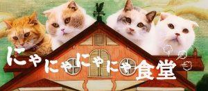 話題のぬこCM「にゃにゃにゃにゃ食堂」の担当声優に阿澄佳奈さん、井澤詩織さんなど出演!